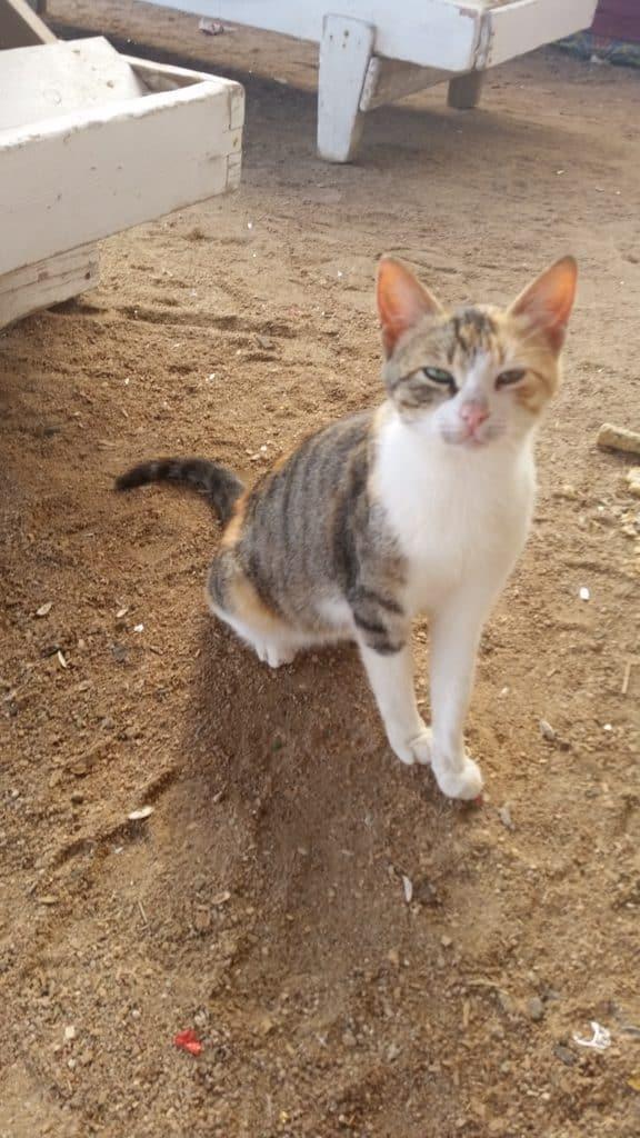 Жизнь котов в Хургаде-1